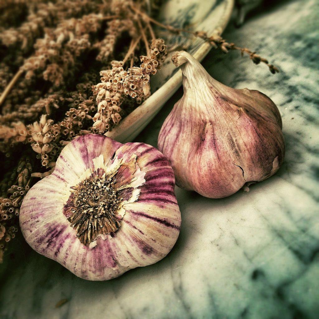 zwei Knoblauchknollen im vordergrund, mit getrocknetem Lavendel im Hintergrund