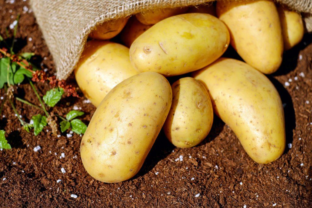 Kartoffeln auf Erde, herausgefallen aus einem Jutesack