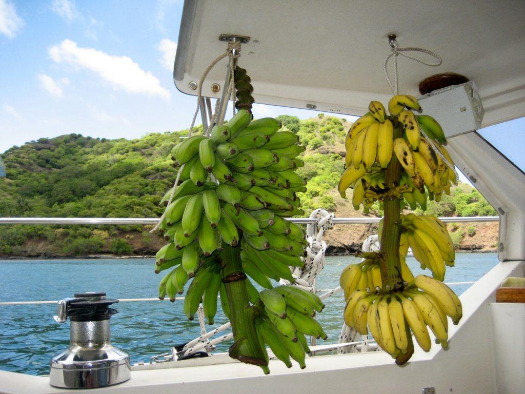 Bananen Pfannkuchen aus ganzen Stauden an Bord